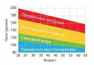 Основные пульсовые зоны, их вычисление и правила тренировок