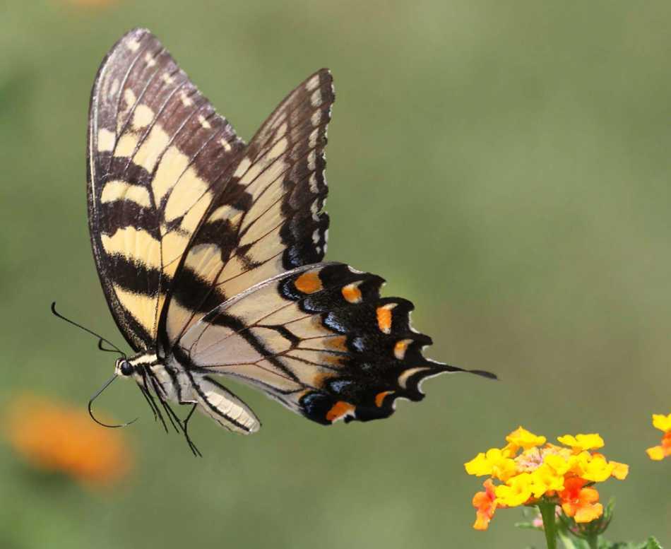 Как делать растяжку «бабочка»: 11 шагов