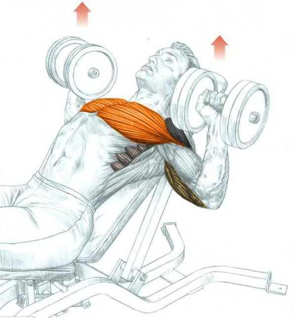 Как накачать верхнюю часть грудных мышц –  комплекс упражнений