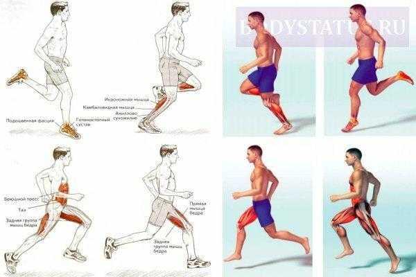 Какие мышц работают при беге: основные нюансы тренировок