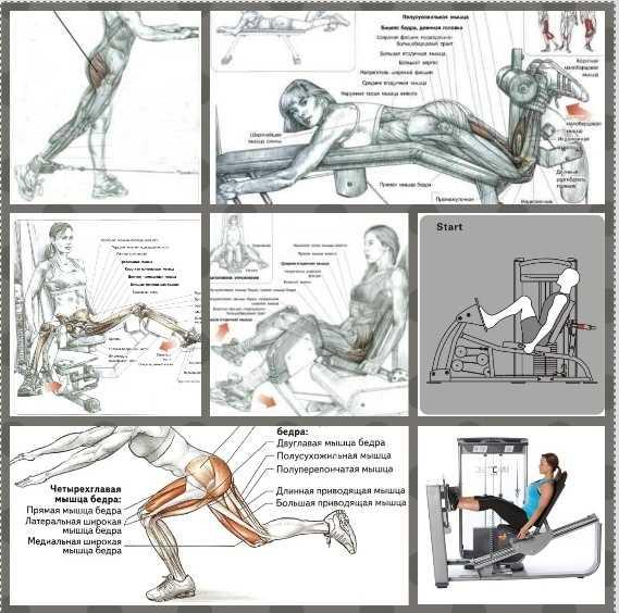 Разгибание ног в тренажере - как делать правильно? обзор самых эффективных методик! фото-инструкция и видео от профи!