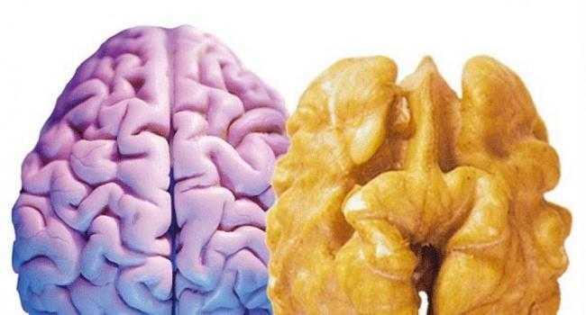 Полезные и вредные продукты для мозговой деятельности