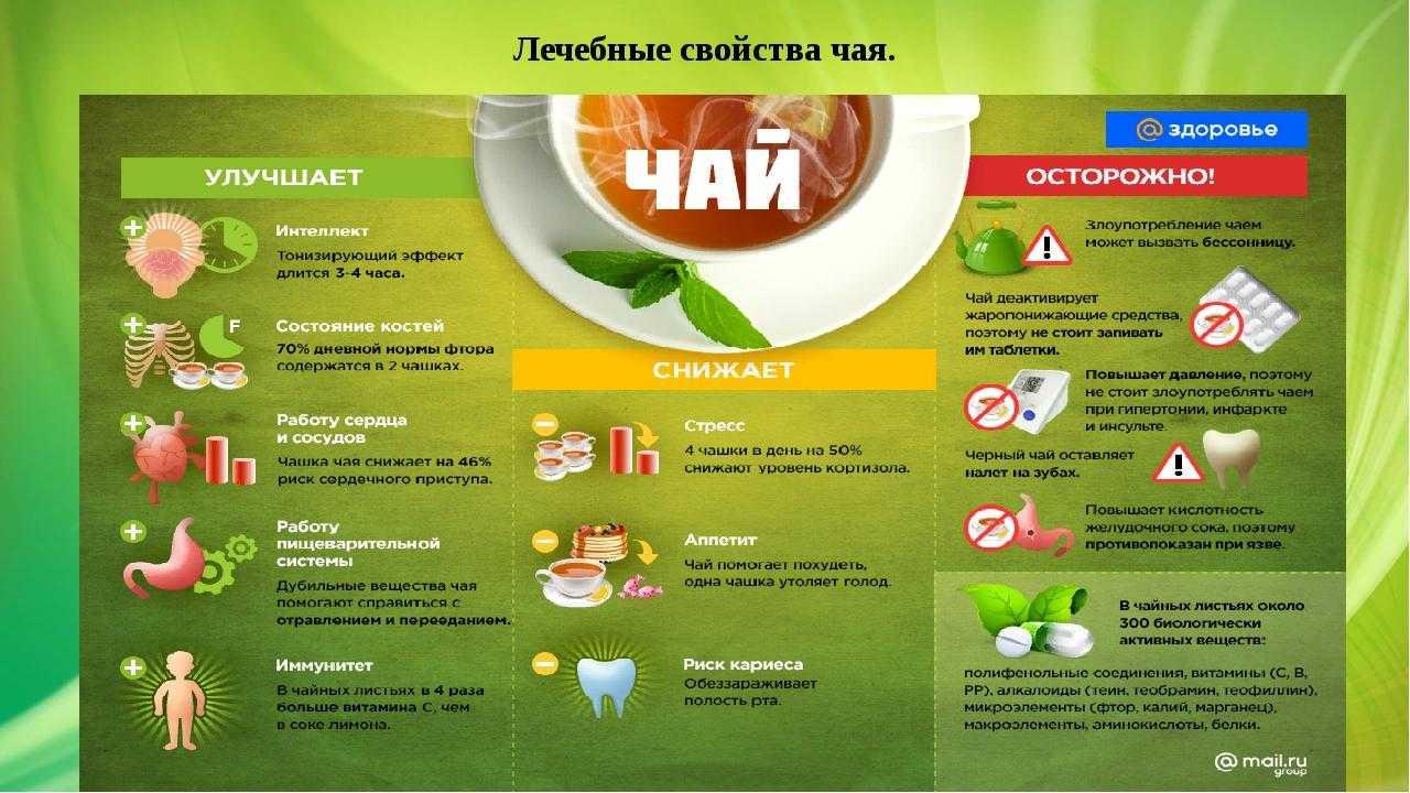 Выращивание чая в домашних условиях: на подоконнике и в саду, выращивание чая в домашних условиях. - польза и вред зеленого чая
