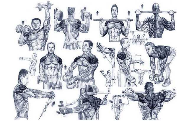 Тренировка плеч: как составить+примеры тренировок