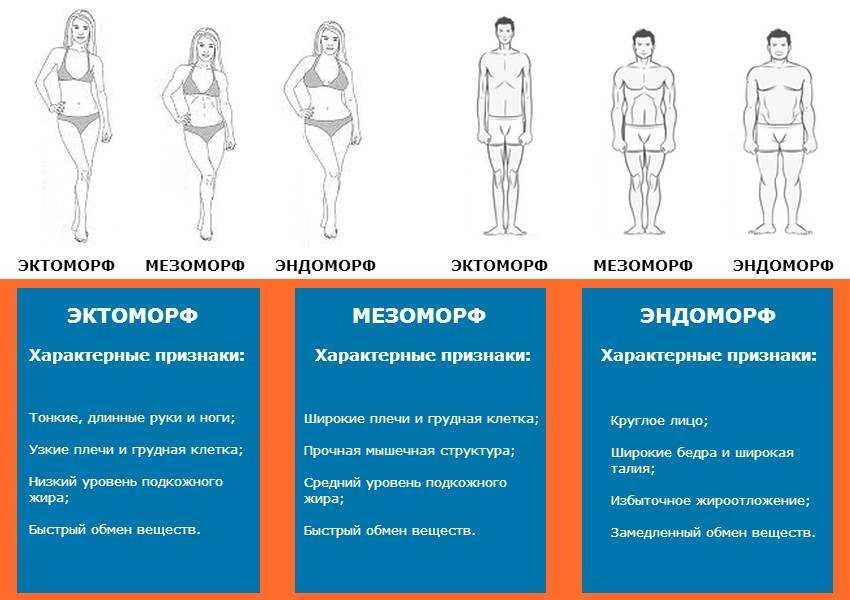 Определение типа телосложения — тест на соматотип