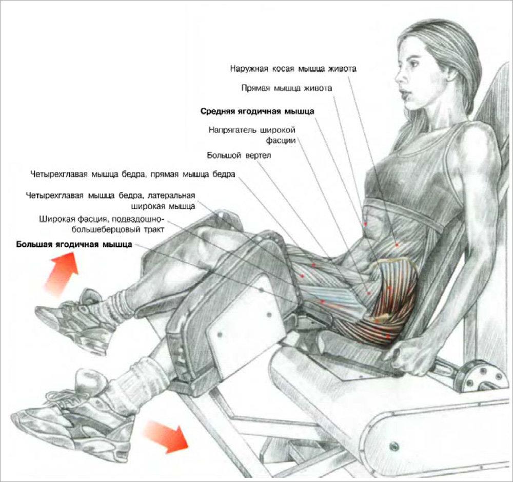 19 лучших упражнений на ягодичные мышцы для упругости и объема (полное руководство)