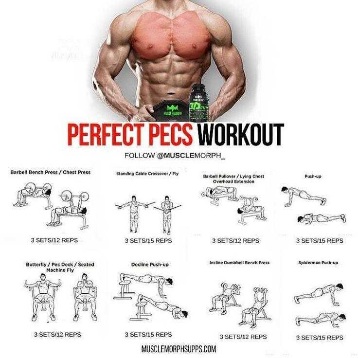 Для каждой части тела необходимы особые упражнения! силовая тренировка на пресс, ноги, спину
