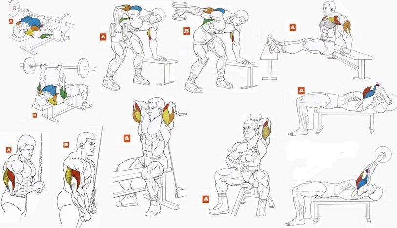 Разведение гантелей лёжа на скамье: рекомендации и техника выполнения разводки   rulebody.ru — правила тела