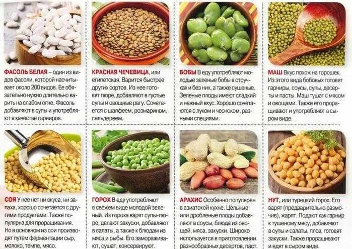 Бобовые продукты на правильном питании и для похудения: польза, особенности, виды Характеристика, вред, особенности потребления, что приготовить, КБЖУ