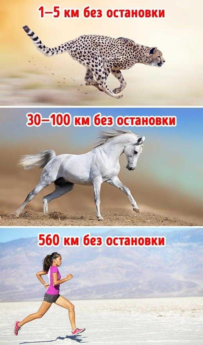 Скорость бега человека – средняя, максимальная и рекордная