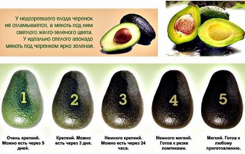 Рецепты с авокадо для похудения - полезные свойства для женщин и мужчин, приготовление диетических блюд