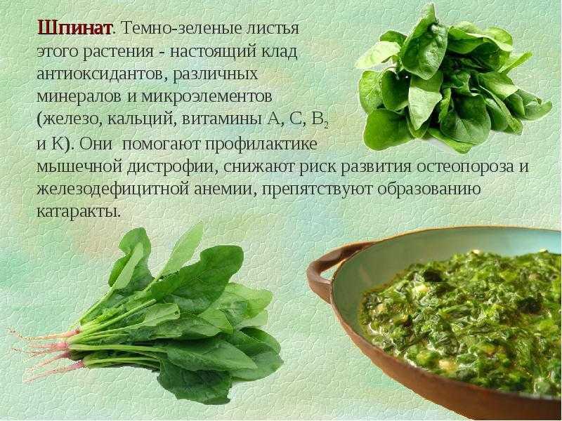 Шпинат: 10 полезных пп-блюд из шпината + в чем польза