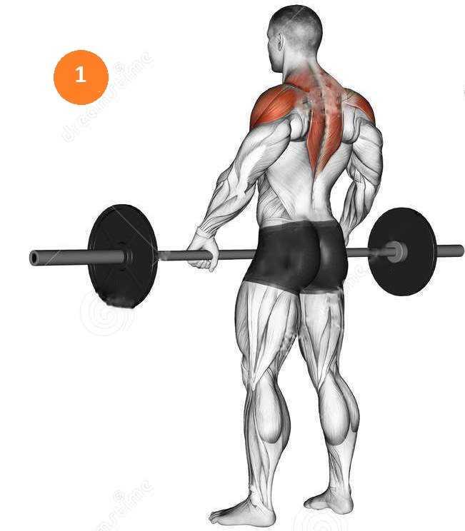 2 комплекса силовых упражнений для развития мышц плечевого пояса
