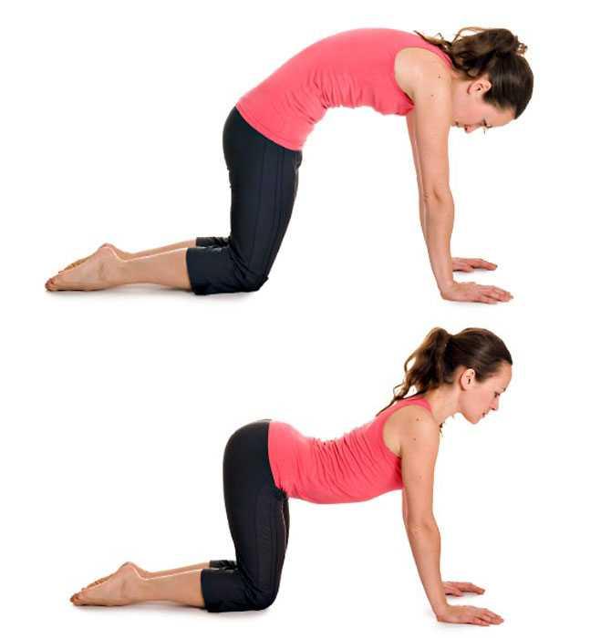 Упражнение кошка – укрепляем мышцы спины и пресс