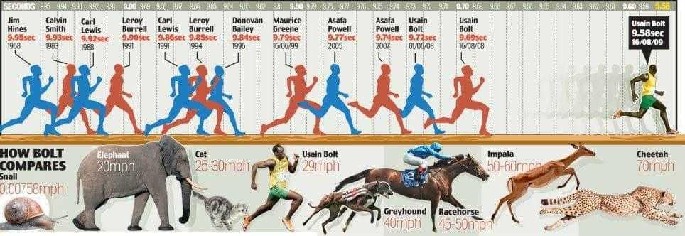 Средняя скорость человека при беге и ходьбе