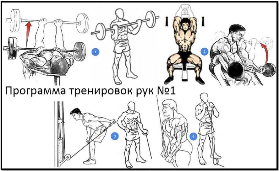 Гибкость – это свобода движений, красота и ловкость Упражнения на статическое растягивание для отдельных частей тела поддерживают мышцы в тонусе