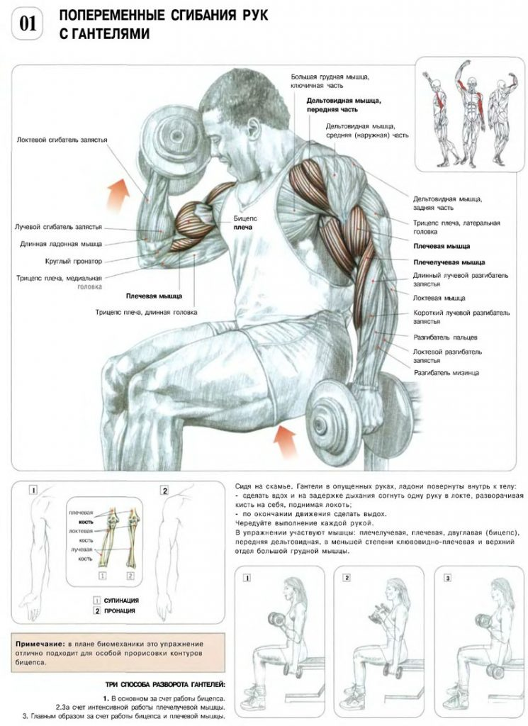Упражнения с гантелями для женщин: подборка эффективных упражнений на каждую группу мышц с техникой выполнения