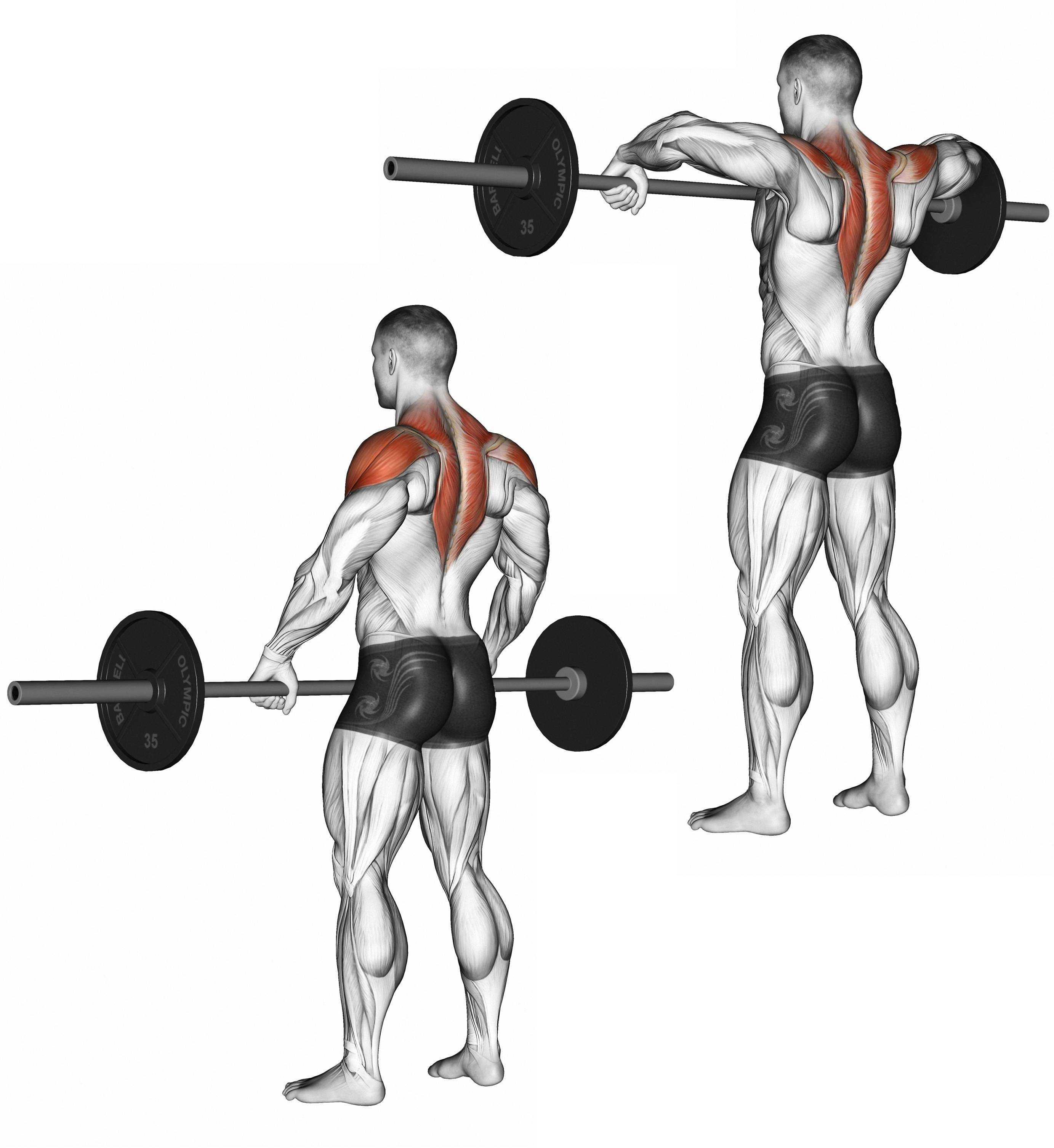 Тяга гантелей к подбородку – развиваем плечи