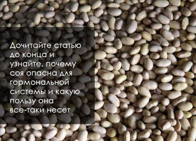 Соевый белок: польза и вред для здоровья