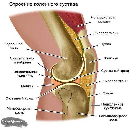 Хруст в коленях при приседании и вставании чем лечить | сустав-help