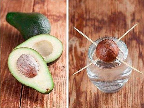 Рецепты с авокадо для похудения живота, простые и полезные блюда с фото